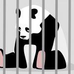sad-panda2